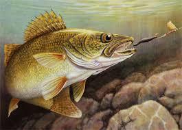 http://www.fishingtech101.com/