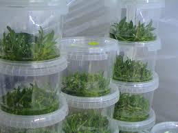 Image result for plant TC containers