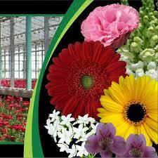 Rosa Flora - Home | Facebook