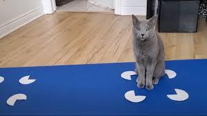 Pet Cats Fall For <b>Optical Illusions</b> Too : NPR