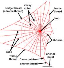 Image result for پرورش عنکبوت