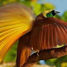 Beautiful <b>Birds</b>-of-Paradise