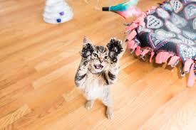 How to <b>Get</b> Kittens Not to <b>Bite</b> You — Kitten Lady