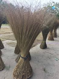 Image result for palm tree leaves for brooms