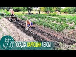 Как длительно хранить <b>морковь</b> и <b>свеклу</b> — идеальные овощи с ...