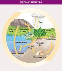 carbon cycle and simple on pinterestsimple phosphorus cycle diagram
