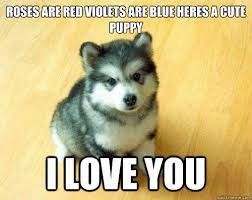 roses are red violets are blue heres a cute puppy i love you ... via Relatably.com