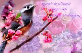 """Résultat de recherche d'images pour """"jolie fleur de printemps"""""""