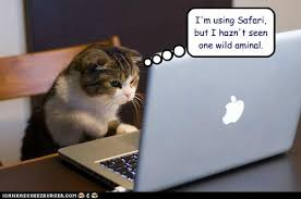 Image result for cat jokes