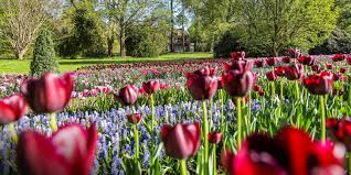 <b>Spring</b> Blooms Season | Longwood Gardens