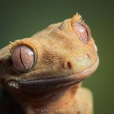 Image result for lizard eyes