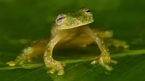 Deep in the Honduran Rain Forest, an Ecological <b>SWAT</b> Team ...