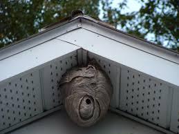 Résultats de recherche d'images pour «photo nid de guepes»