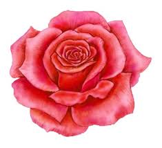 Image result for red rose designs