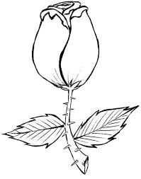 Resultado de imagem para desenhos de botões de rosas