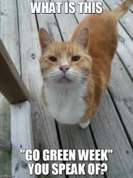Animal memes for Go Green Week | Energize-WorcesterEnergize-Worcester via Relatably.com