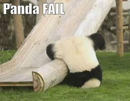 There are so many photos of pandas doing stupid things, it is hard to choose just one to show you.