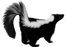 Image result for animated skunk