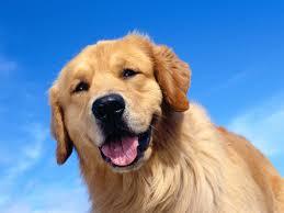 como entrenar a tu perro agresivo