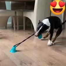 Multifunction <b>Pet Molar</b> Bite Toy Cleaning <b>Teeth</b> Safety <b>Pets</b> ...