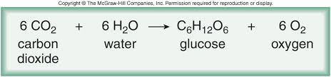 Image result for chemical equation for photosynthesis