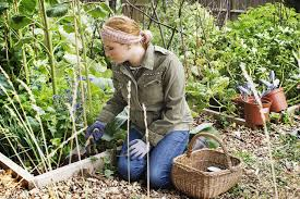 what to consider when planning a vegetable garden how to start your own organic vegetable garden