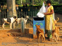 the voice of stray dogs uma the stray dog feeder of cubbon she unpacks the food on a waste bin as the dogs wait for breakfast