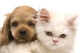 <b>Puppy</b> & <b>Kitten</b> Care | Midland <b>Animal</b> Clinic