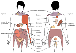 pain referred from viscera laurence hattersley osteopath map of referred symptoms from viscera