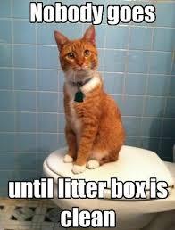 Cat Memes on Pinterest   Cats Humor, Cats and Batman via Relatably.com
