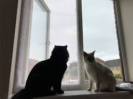 DUCHEN <b>Window</b> Cat Protection Mesh for Cats,Cat Net,<b>Self</b> ...