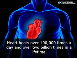 Image result for human heart beats