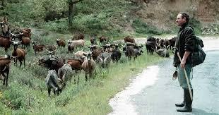 Resultado de imagen de imagen de rebaños de cabras