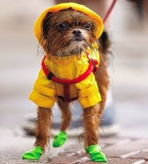 Image result for dogs in raincoats and boots