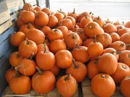 <b>Pumpkin</b> - Wikipedia