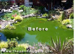 Small Picture Pond Design Gone Wrong The Pond Digger