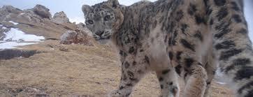 Snow <b>Leopard</b> Trust: Home