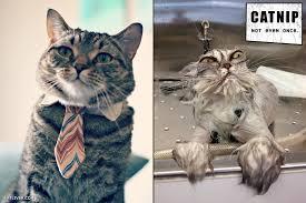 GAGBAY - Catnip: not even once via Relatably.com