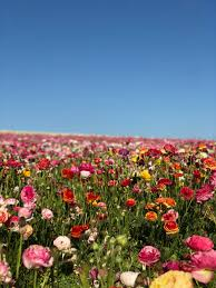 500+ <b>Flower Field</b> Pictures [HD] | Download Free Images on Unsplash