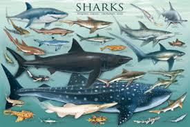 Image result for sharks