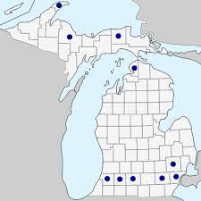Conringia orientalis - Michigan Flora