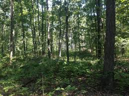 illinois timber land hunting great building and lake sites illinois timber land hunting great building and lake sites for