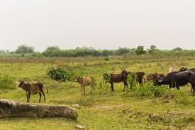 Riserva naturale Koshi Tappu