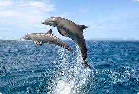 أكبر تجميع لأجمل صور من اعماق البحار (سبحان الله الخالق العظيم) - صفحة 2 Images?q=tbn:ANd9GcRTlYru8ky-IwDYxrDqpyxktbXligW7wcqIMy-rdpjVB0urSG__