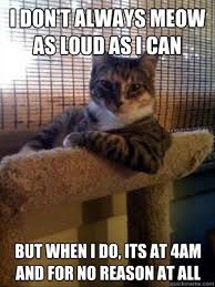 Fun image blog: Funny appropriate cat pictures via Relatably.com