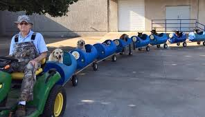 man builds dog train to take rescued pups out on little adventures