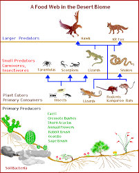 food chain food web   desert biomepicture