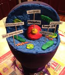 awesome ways to make a cell model homework cell model and plants animal cell 3d model used a styrofoam head from hobby lobby crazart modeling clay