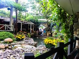 Image result for quán cà phê vườn
