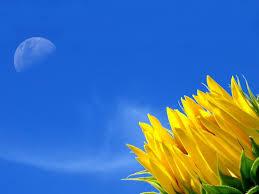 Image result for blue color flowers wallpaper